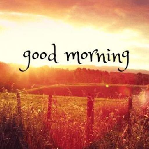 Good Morning HD Flowers