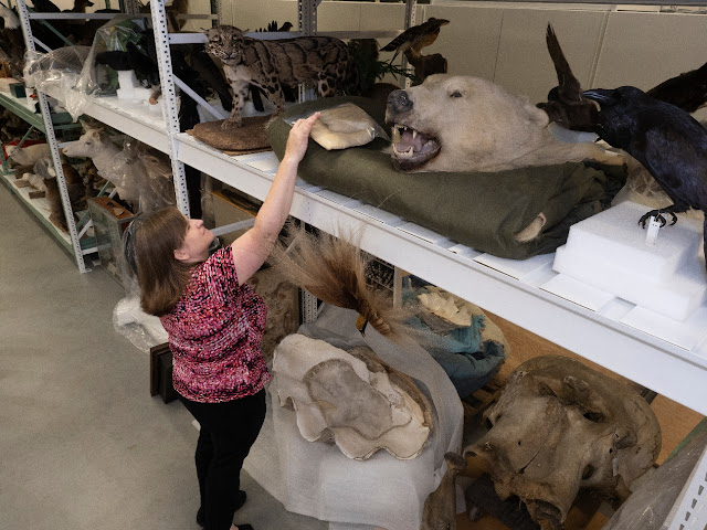 Museums put ancient DNA to work for wildlife