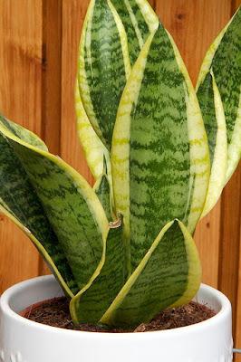 10 piante che purificano l 39 aria di casa - Piante che purificano l aria in camera da letto ...
