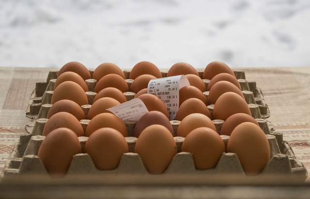 modal kandang ayam petelur 1000 ekor