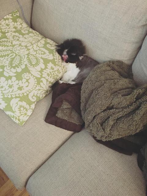 Chase Kucing Tanpa Wajah Viral