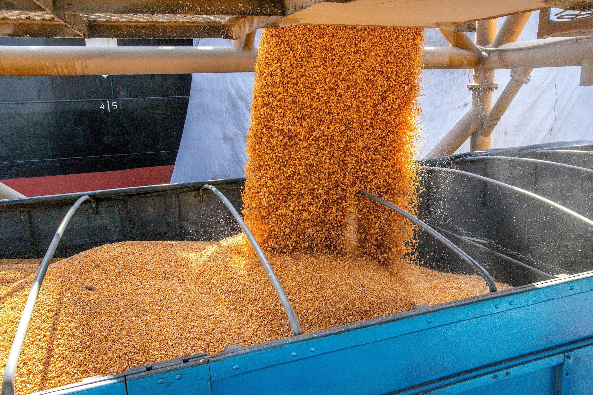 Fortesolo opera descarga de milho no porto de Paranaguá