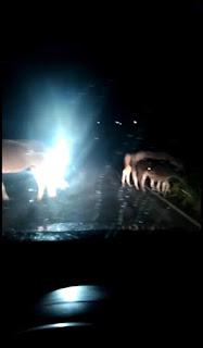 Entre Guarabira e Cuitegi, internauta flagra animais cruzando estrada de um lado para o outro oferecendo perigo para motoristas e motociclistas