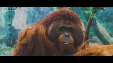 新竹動物園 ProRes Raw|商業影片|宣傳片|旅遊影片|社群廣告|新竹景點