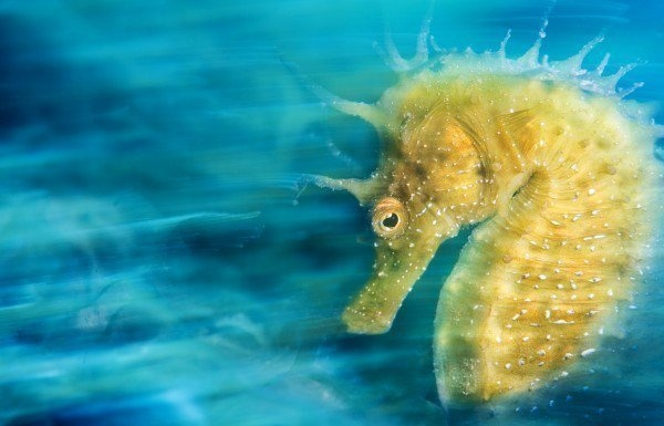 The Best Underwater Photos EVER Taken Show Life From A Different Angle. - Underwater Photographer Of The Year 2016 'Gold' by Davide Lopresti from Italy
