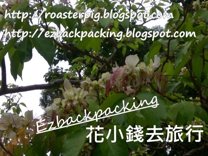 香港 魚木