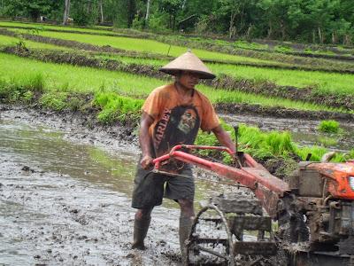 penggunaan traktor