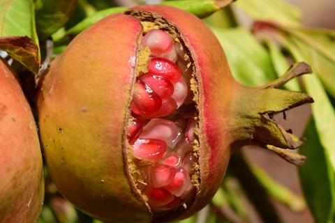 Tree removal Alpharetta Ga pomegranate watering