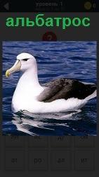 Изображение удивительной и сильной птицы Альбатрос на воде.Готовится нырять за своей добычей очень глубоко. Ответ на 1 уровне в игре 1000 головоломок.