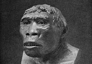 3 Jenis Manusia Purba yang Ditemukan di Indonesia