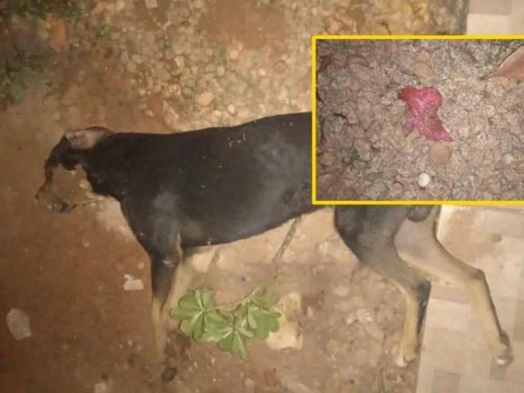 Criança de 05 anos se emociona ao encontrar seu cachorro de estimação morto, possivelmente por envenenamento