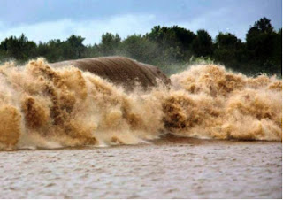 Brasil-Pororoca-Gigante