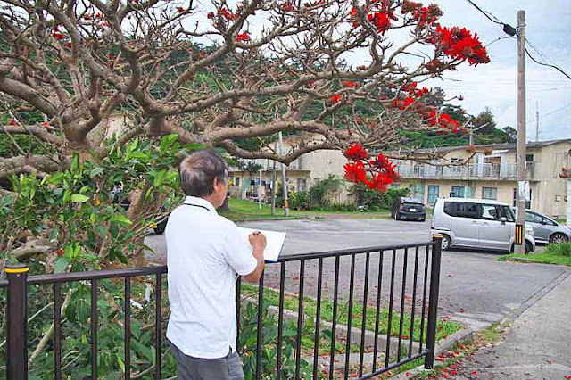 sketch artist, tree, flowers, Deigo
