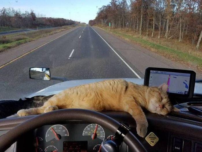 Funny cats - part 250, best funny cat images, cute cat photos