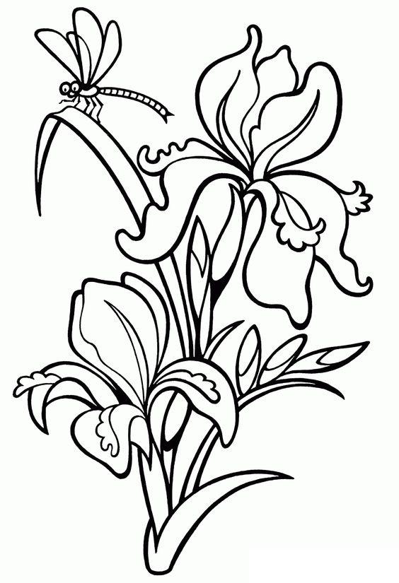 Tranh tô màu bông hoa 11