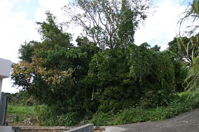 照屋グスク手前の草木が生い茂った場所の写真