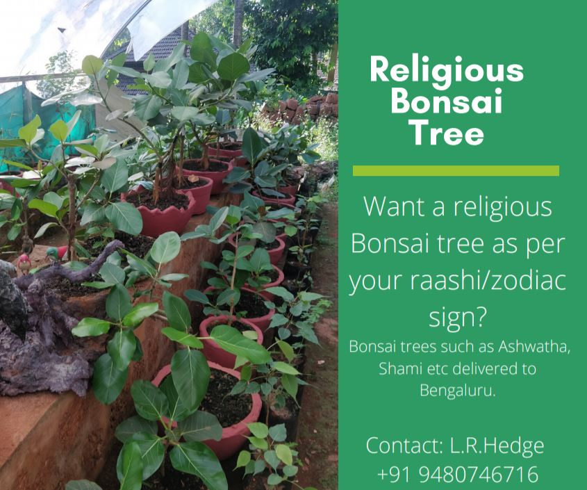 Havyaka Foods Want Religious Bonsai Tree Which Is Lucky To You