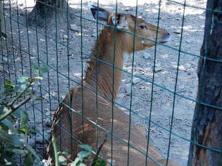 Parco Gallorose(ガッロロゼ公園)の動物