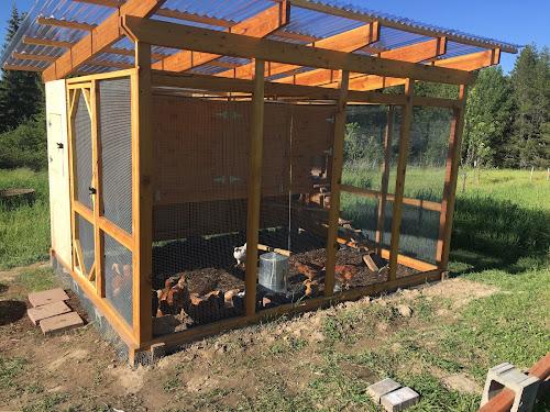back yard chicken coop