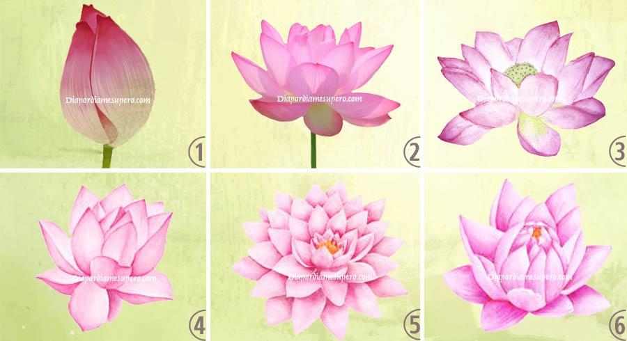 Oráculo: Elige la flor de loto  y descubre tu situación actual