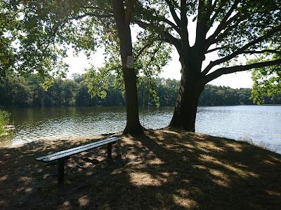 Bank und Baum am Lochower See