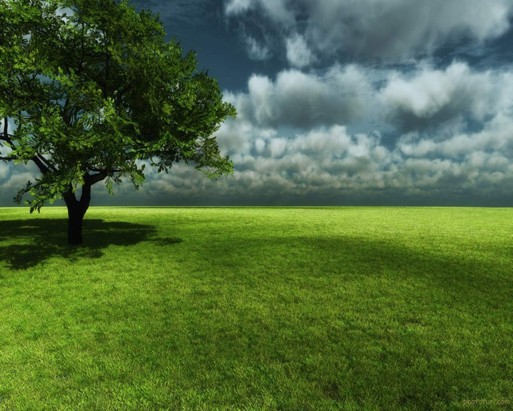 Android Live Wallpaper 3d Effect Wallpaper Related To Nature