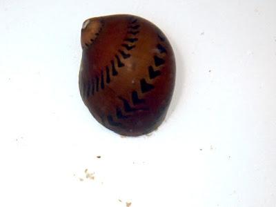巧克力螺,洋蔥螺