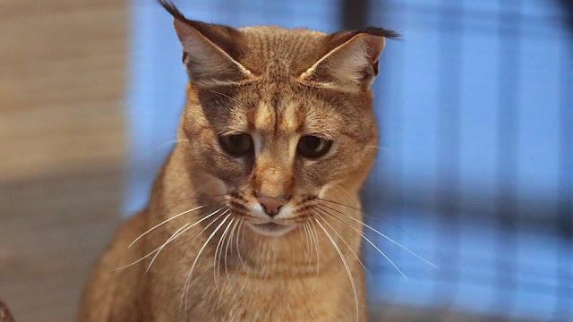 Кошку за миллион рублей жестоко убили в элитном поселке Подмосковья