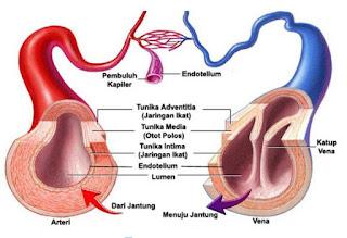 Kelainan, Gejala dan Prinsip Terapi Penyakit Arteri Koronari. Penyakit Artiri Koronari adalah penyakit Jantung.  Penyakit arteri koronari atau coronary artery disease (CAD) adaah jenis paling umum dari penyakit jantung. Penyakit arteri koroner terjadi ketika arteri yang mensuplai darah ke otot jantung menjadi mengeras dan menyempit. Hal ini disebabkan penumpukan kolesterol dan material lainnya, yang disebut plak, pada dinding pembuluh darah
