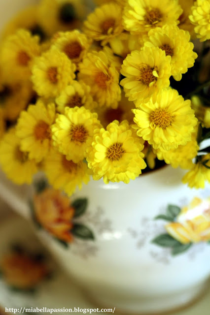 'Fancy That Yellow' Chrysanthemum.
