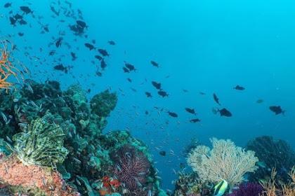 7 wisata di Sulawesi Tenggara wajib di kunjungi