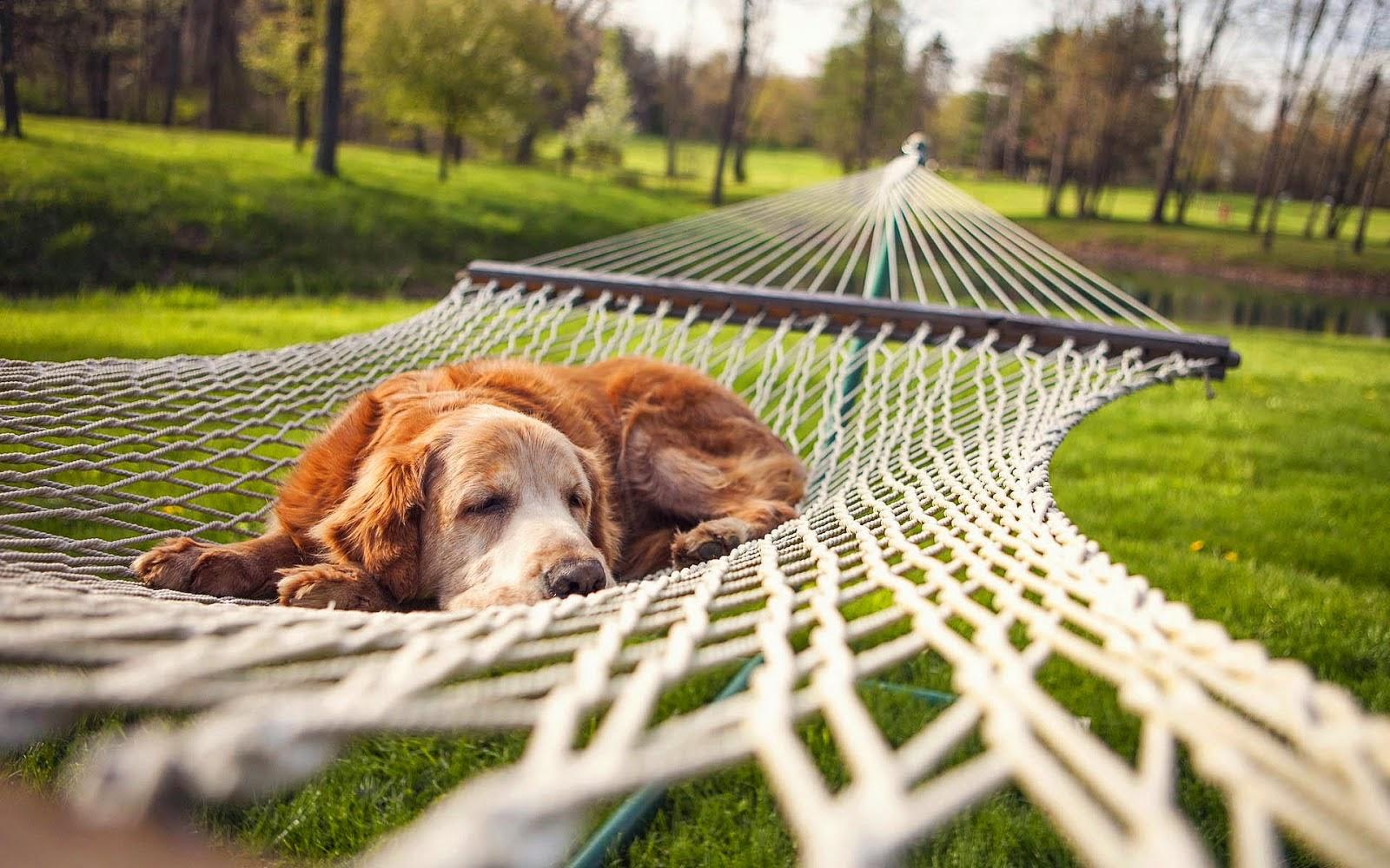 Wallpaper met hond in hangmat in het park