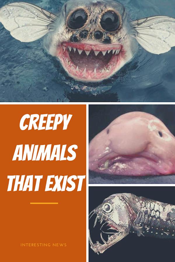 creepy animals that exist