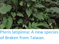 https://sciencythoughts.blogspot.com/2017/09/pteris-latipinna-new-species-of-braken.html