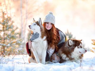 صور هاسكي ,صور كلاب الهاسكي ,خلفيات هاسكي hd,,صور كلاب هاسكي اصلي ,صور كلاب هاسكي شرسه ,صور كلاب هاسكي صغار