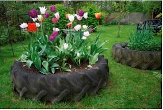 sembrar tulipanes en llantas, sembrar flores en llantas