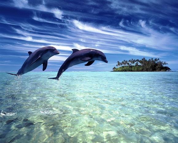 بالصور والفيديو :- معلومات عن الدلافين dolphin_7.jpg