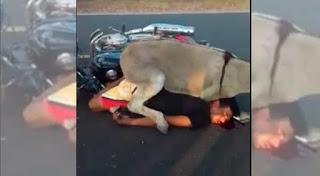 Um Jumento na pista, causa acidente de motociclista que trafegava na BR 104 em Murici, Alagoas.
