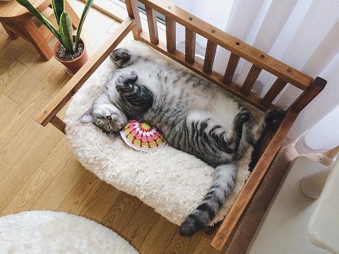 ベンチの上で仰向けになって寝てるデブ猫