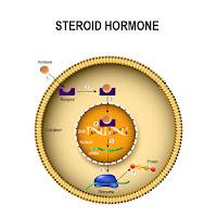 menjaga hormon teroid
