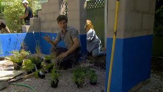 David Rich  Mediterranean planting scheme