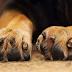 Μαζική δολοφονία ζώων στον Μώλο Φθιώτιδας