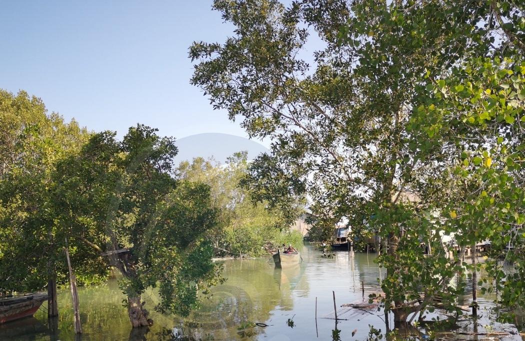 UMRAH Kepri dan BRGM RI akan Bangun Wisata Mangrove di Pulau Bintan