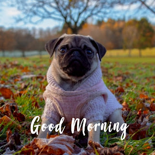 15+ best cute good morning images
