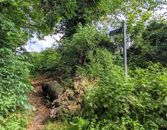 Great Gaddesden bridleway 39 off Red Lion Lane - point 1