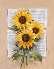 gambar bunga matahari png