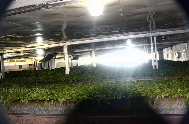 Timbangan dan tempat penjemuran daun teh