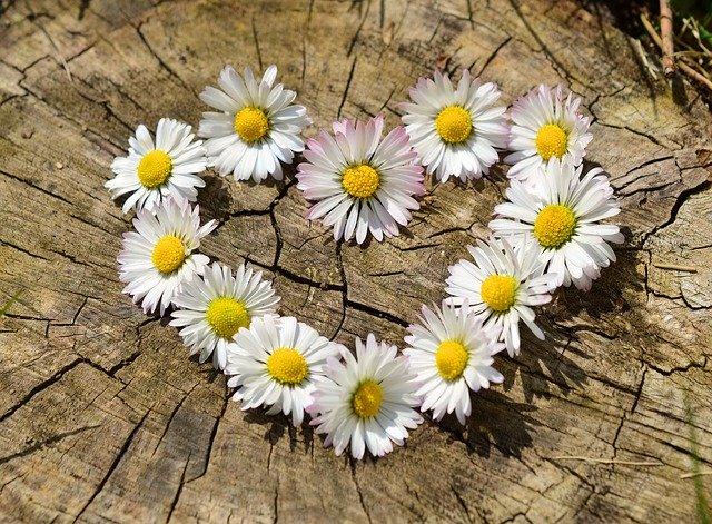 bunga berbentuk love