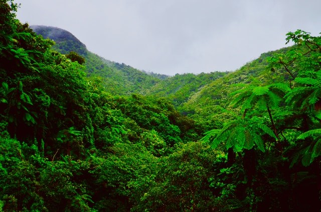 Rainforest in Puerto Rico in the Caribbean