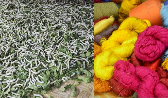 Status+of+Sericulture+in+the+Country